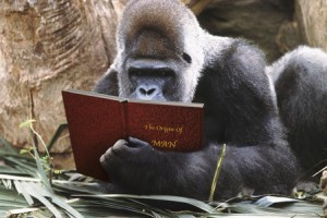 Gorilla Reading The Origin of Man