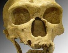 """¿Resucitar neandertales con biología sintética?"" de Jorge Riechmann"